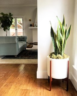 5 Houseplants You Can't Kill - Photo 1 of 5 -