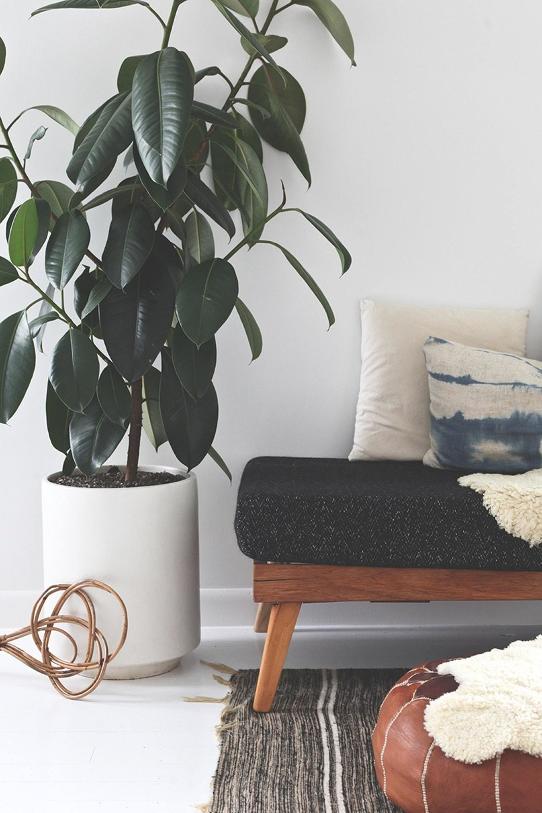 Living Room, Rug Floor, and Bench  Photo 6 of 6 in 5 Houseplants You Can't Kill