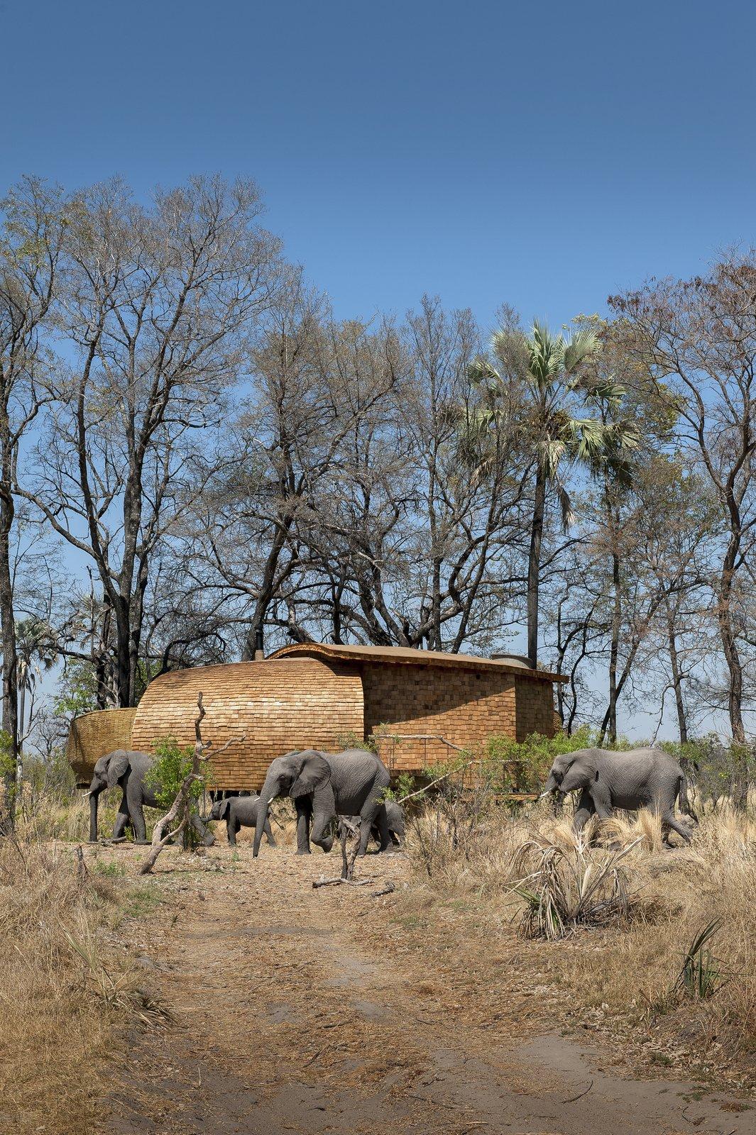 Photo 2 of 13 in Eco-Friendly Safari Lodge in Africa's Okavango Delta