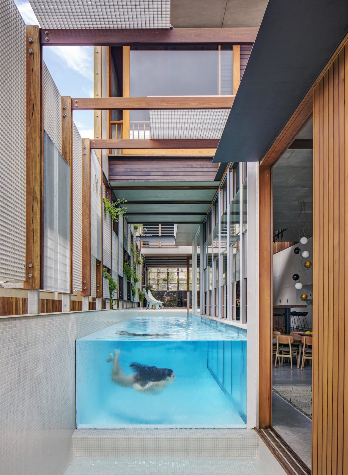Outdoor and Swimming Pools, Tubs, Shower  Photo 13 of 19 in Living Screens Conceal a North Bondi Beach House and a Semi-Indoor Pool
