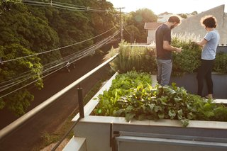 An organic rooftop garden allows the homeowners to harvest fresh ingredients.