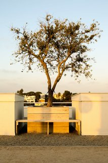 The olive tree—which is 100 years old—had to be placed in the roof garden with a crane.