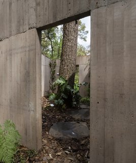 A closer look at how the trees and native vegetation have become part of the architecture.