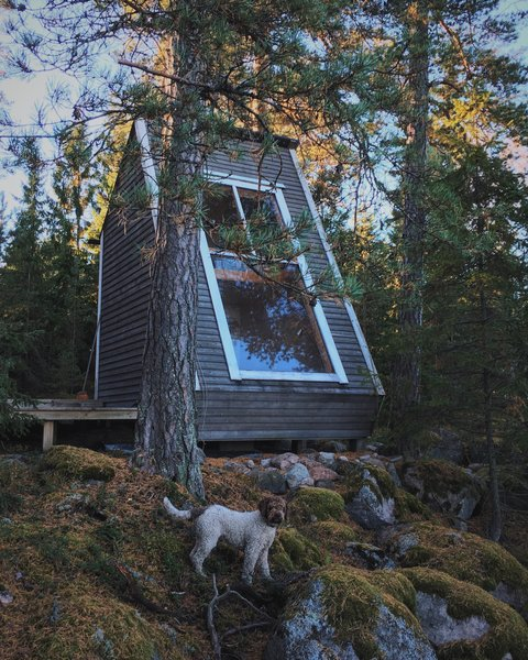 Above the living lounge, the 50-square-foot loft faces a window that frames striking views of the tree canopies.    Photo 5 of 11 in A Tiny Cabin Is Built in Three Weeks For Only $10.5K