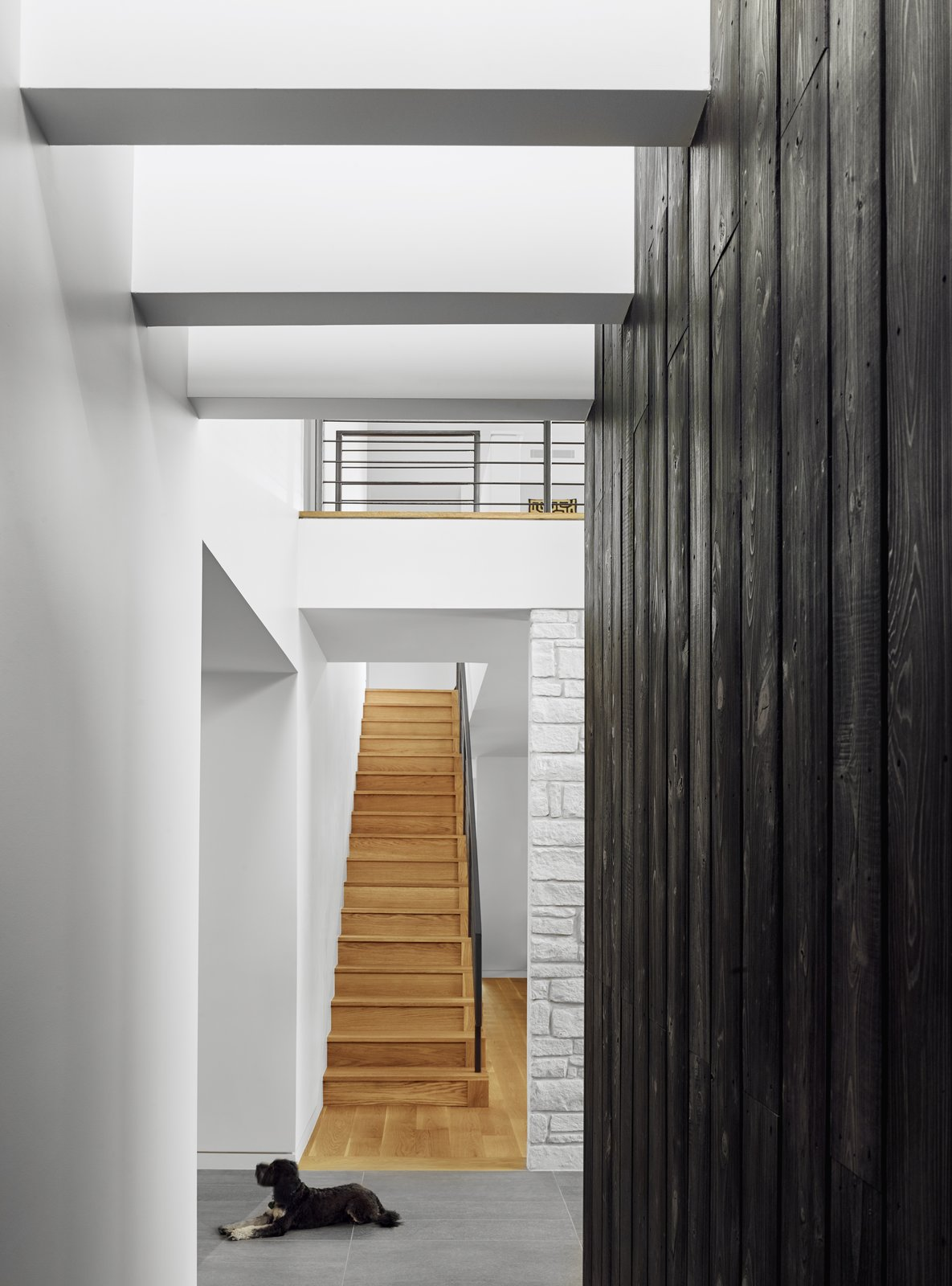 Staircase, Metal Railing, and Wood Tread From the double-height entry hall, a staircase leads to the living area on the new upper level.       Photo 4 of 13 in A Glass Addition Unveils Treetop Views For This Texan Home