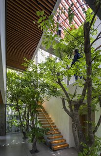 """Light filters in from all sides and falls through the home's """"canopy"""" of trees."""
