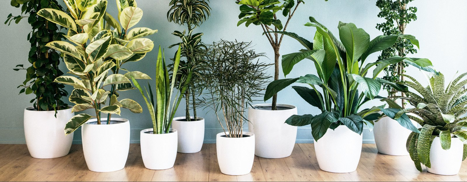 Why Plants Improve Mornings, by The Sill