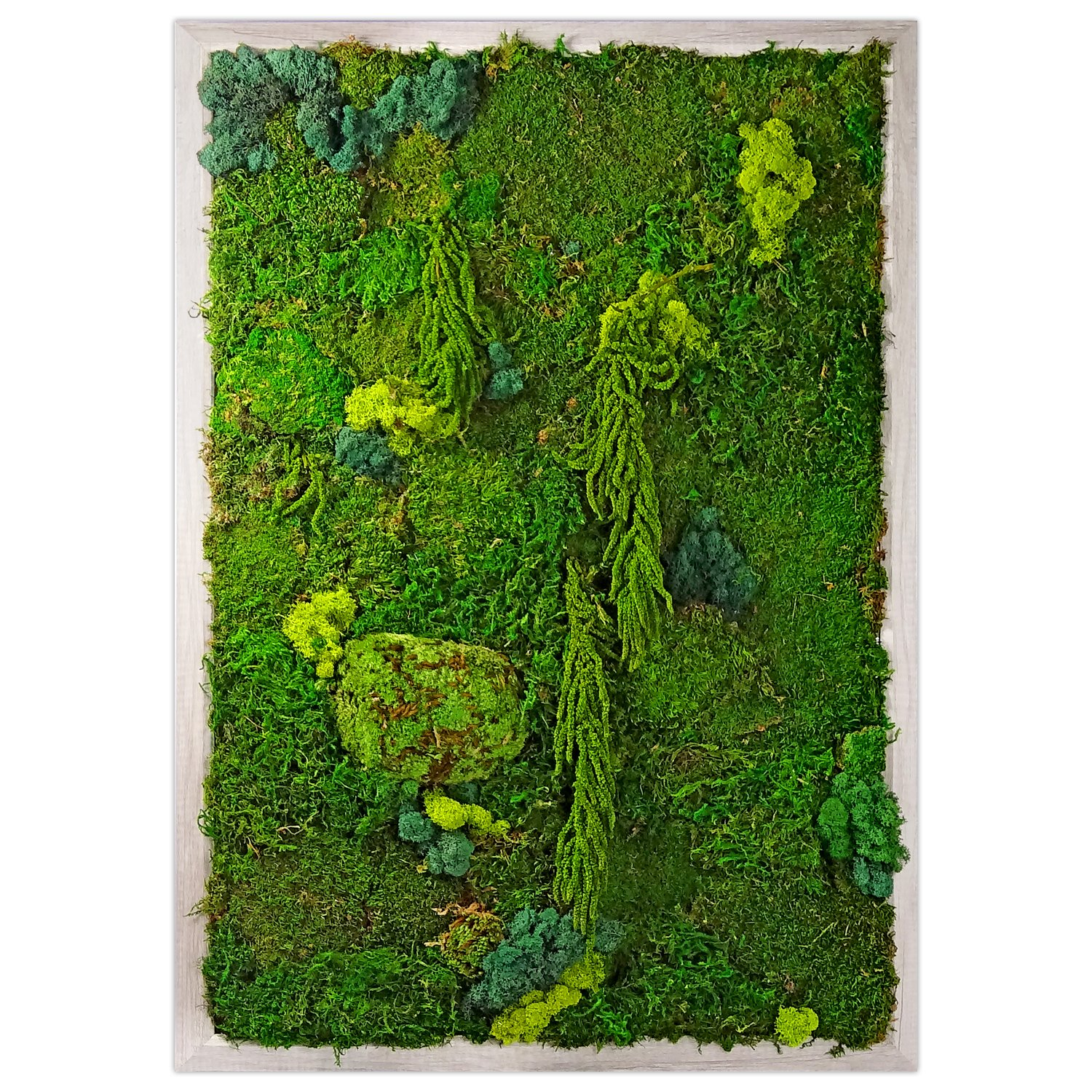 Photo 1 of 1 in Preserved Moss Living Wall Garden