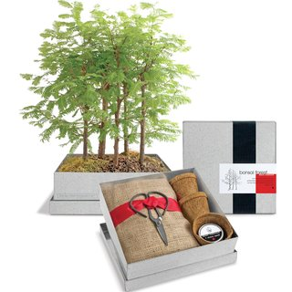 Grow-Your-Own Bonsai Forest Kit