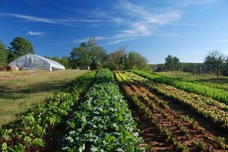 The local farmland provides food for weekly farmer's markets and restaurants in the community.