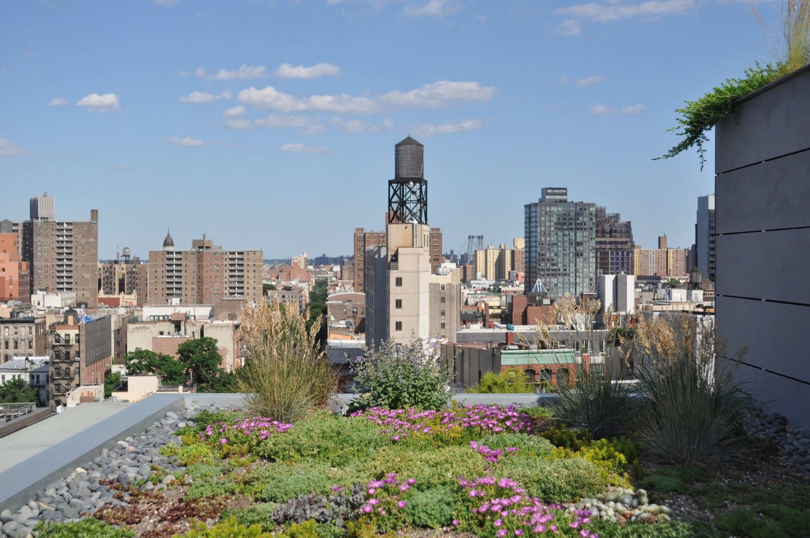 Photo 8 of 14 in A Brooklyn-Based Landscape Firm That's Reshaping New York City's Green Urban Scene
