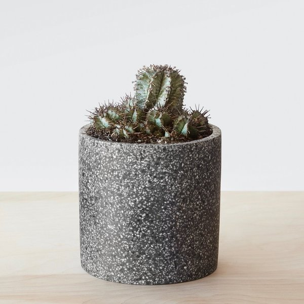The Citizenry Sepon Terrazzo Planter