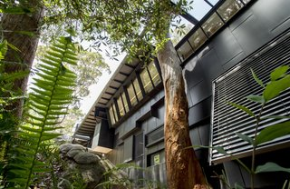 Black, weathered zinc clads the exterior. Angled walls and an opening in the eave preserves the mature trees on the site.
