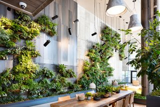 Living Green Walls 101 Their Benefits And How They Re Made