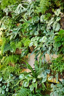 Check Out This Brooklyn Hotel's Dramatic Living Wall Installation - Photo 5 of 6 -