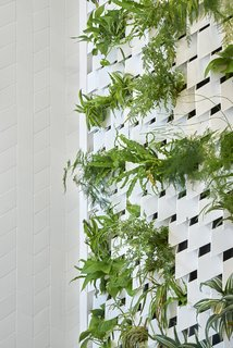 A fern living wall encloses the shower.