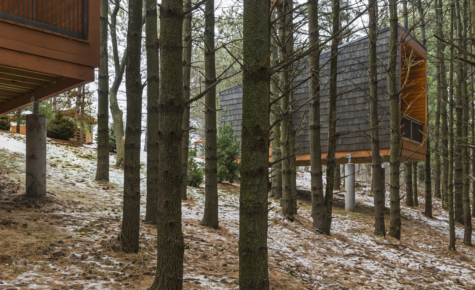 Outdoor, Woodland, Trees, and Slope  Photo 1 of 8 in Camp in Style at This Trio of Cedar-Clad Cabins in Minnesota