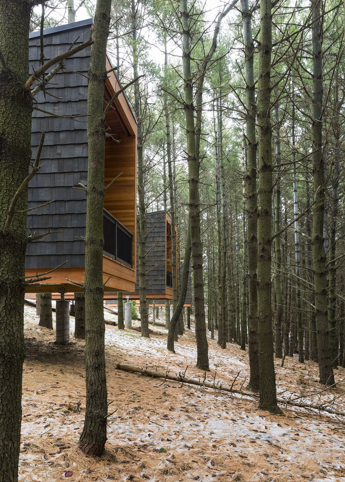 Outdoor, Woodland, Slope, and Trees  Photo 3 of 8 in Camp in Style at This Trio of Cedar-Clad Cabins in Minnesota