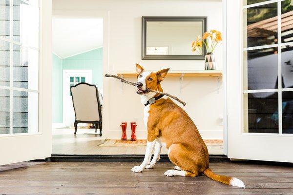 Tech Talk: 4 Smart Devices to Make Pet Care a Breeze
