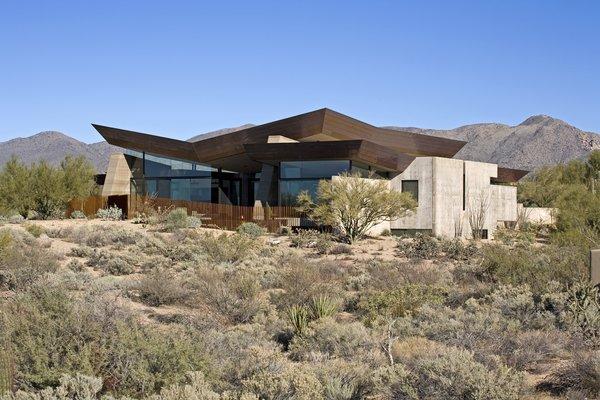 Desert Wing
