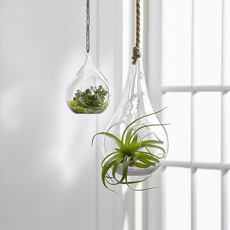 crate barrel glass hanging planters by crate and barrel dwell. Black Bedroom Furniture Sets. Home Design Ideas