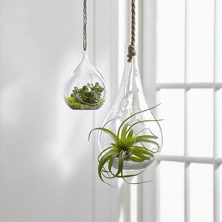 Crate & Barrel Glass Hanging Planters
