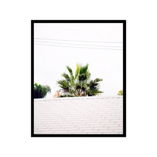 Roof Palm by Hamish Robertson Print