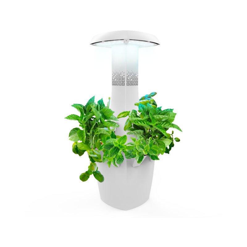 5 Simple Tips For Growing an Indoor Herb Garden