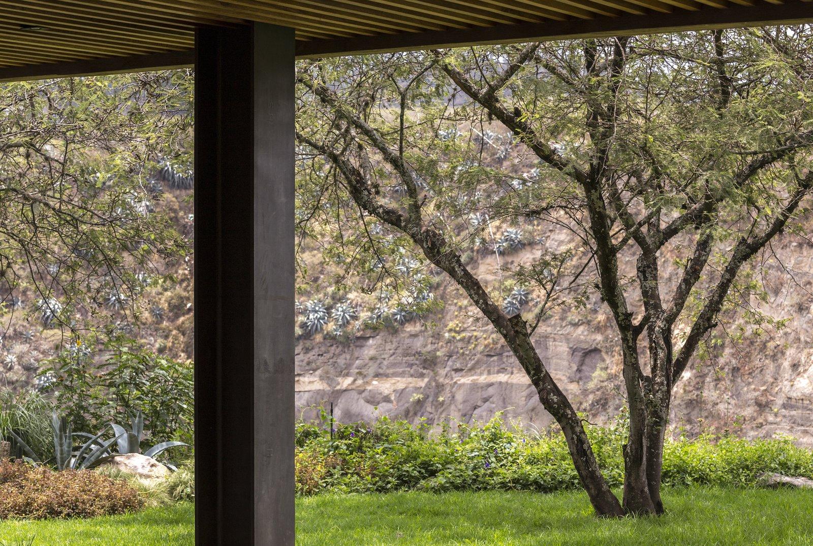 Outdoor, Garden, Back Yard, Desert, Trees, Grass, Gardens, Flowers, Large, and Metal  Best Outdoor Garden Desert Photos from La casa en la quebrada