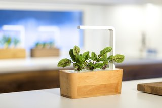 Clueless About Gardening? These 5 Smart Planters Can Help - Photo 4 of 9 -