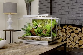 Clueless About Gardening? These 5 Smart Planters Can Help - Photo 8 of 9 -