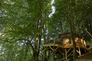 The hexagonal tree house is slightly over 800 square feet in size.