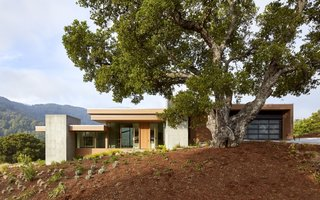 Set between massive oak trees, the home was sensitively placed to minimize site impact.