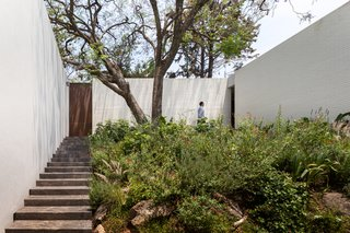 A Serene Home in Mexico Weaves Around Verdant Gardens