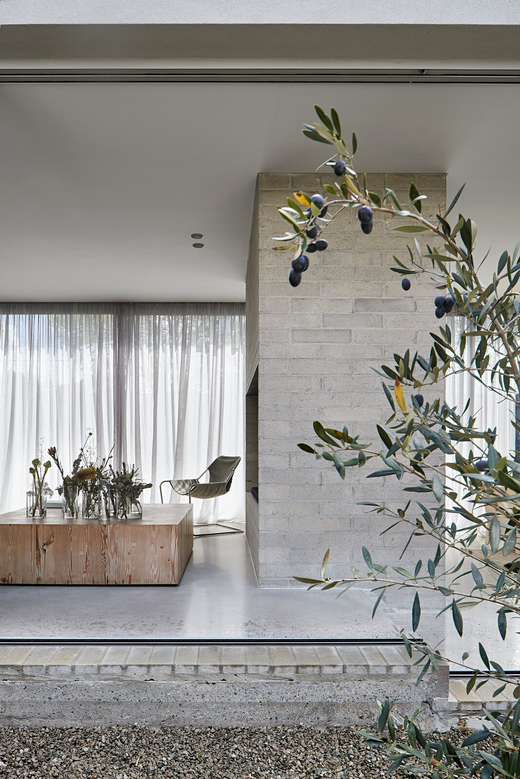 Outdoor, Side Yard, Trees, and Gardens  Photo 18 of 20 in A Concrete House Is Softened by an Airy Internal Courtyard, Complete With an Olive Grove from Ruxton Rise Residence